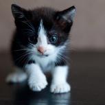 Отдам котёнка. Срочно ищу ей дом, Санкт-Петербург