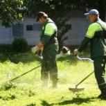 Услуги по покосу травы и кустарников в Санкт-Петербурге и области, Санкт-Петербург
